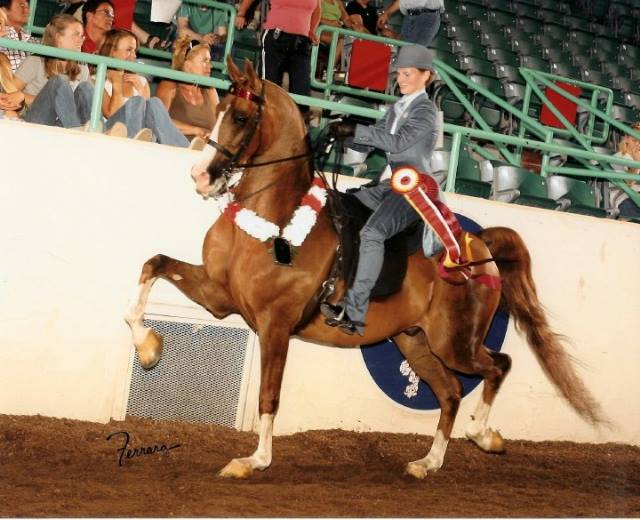 Kiira and Forty Second Street winning Youth National Reserve Champion HA English Pleasure 13 & under in 2006