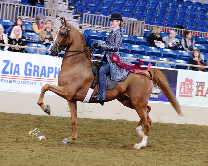 Kiira and Voulez Vu winning Top Ten in HA Country English Pleasure at the 2015 US Nationals